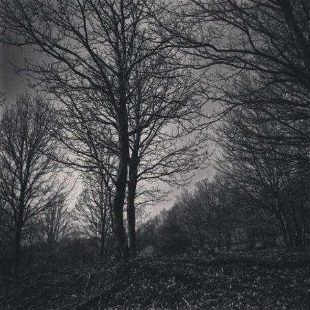 Instaturkey . Instagramt ürkiye. Gününfotoğrafı . Gununkaresi . orman. siyah ağaç trees. forest branch dark goth