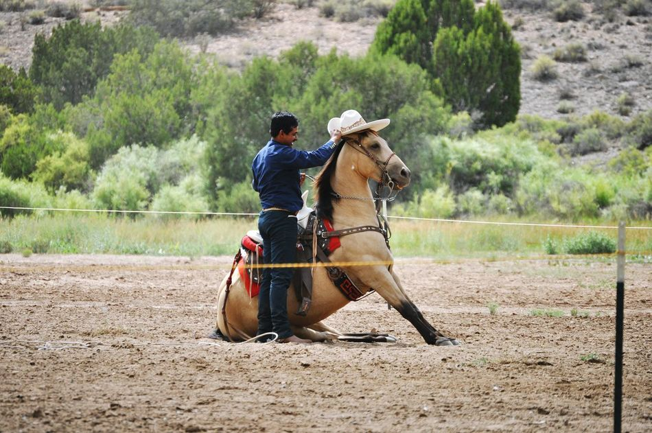 Charreria Horses Charroup Mexico Newmexico Santafenm Nature Charro Horses.. Cultura Mexicana NewMexcio