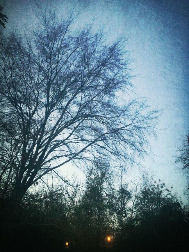 Winter Sunday Morning