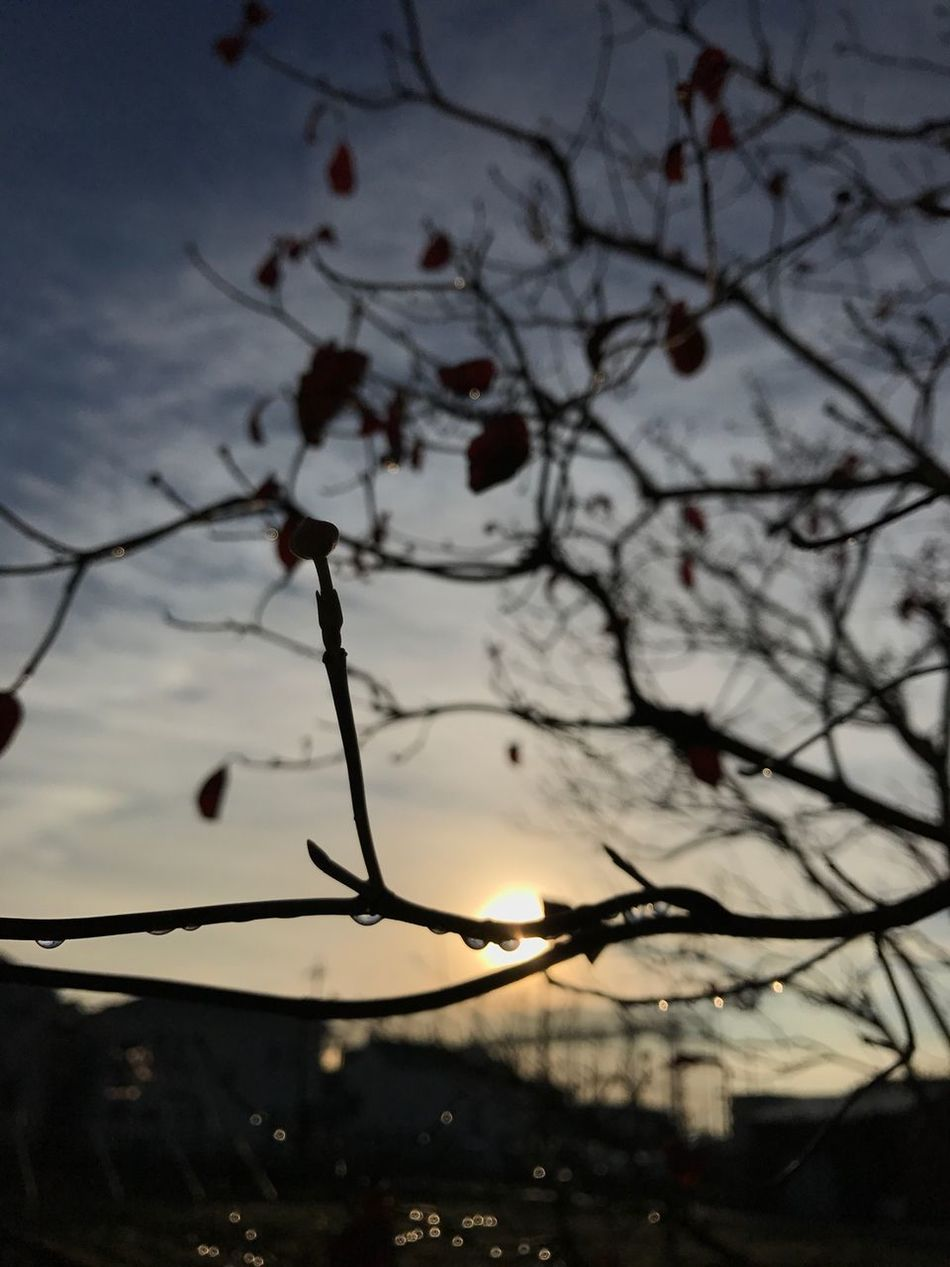 Catch it on this morning just snapped. Little bit out of focus... Nature EyeEm Nature Lover Autumn