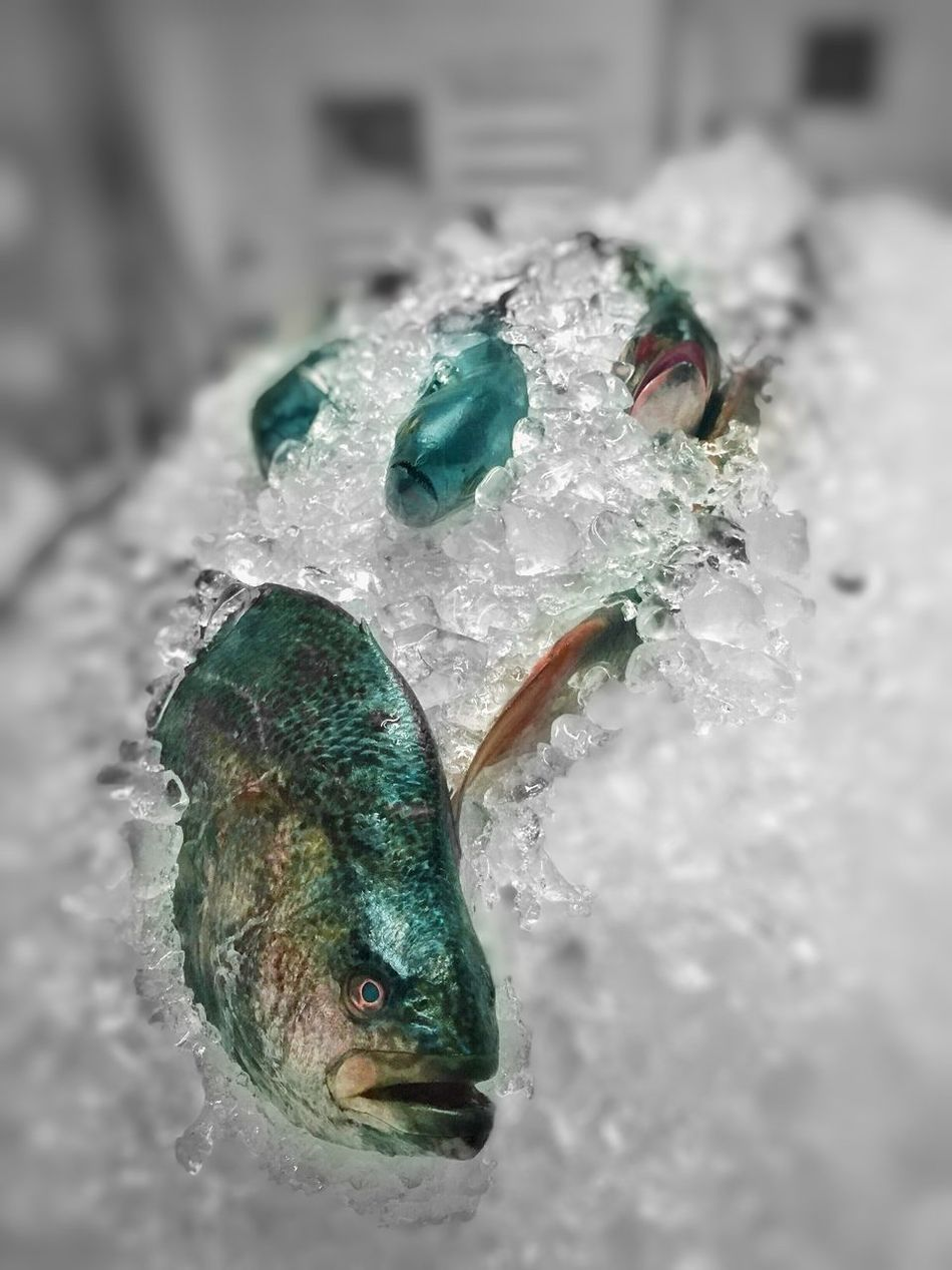 Beautiful stock photos of fish, Animal Themes, Brazil, Business, Cold Temperature