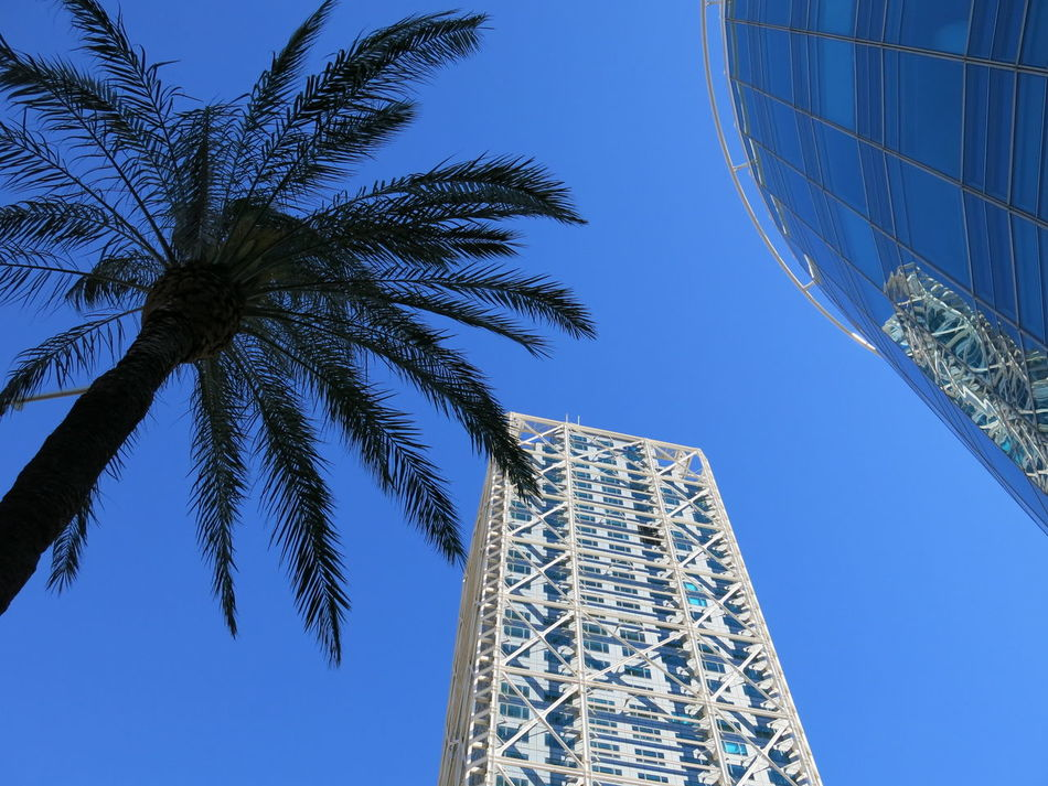 Urban nature Adapted To The City Architecture Blue Building Building Exterior Cityscape Clear Sky Curtain Walls Glass Facades Glass Walls Low Angle View Low Angle View Modern Architecture Palm Tree Reflection Sky Skyscraper Structural Glazing Structures And Architecture Tall - High Tall Buildings Tree Tree Urban Nature Urban Skyline EyeEmNewHere