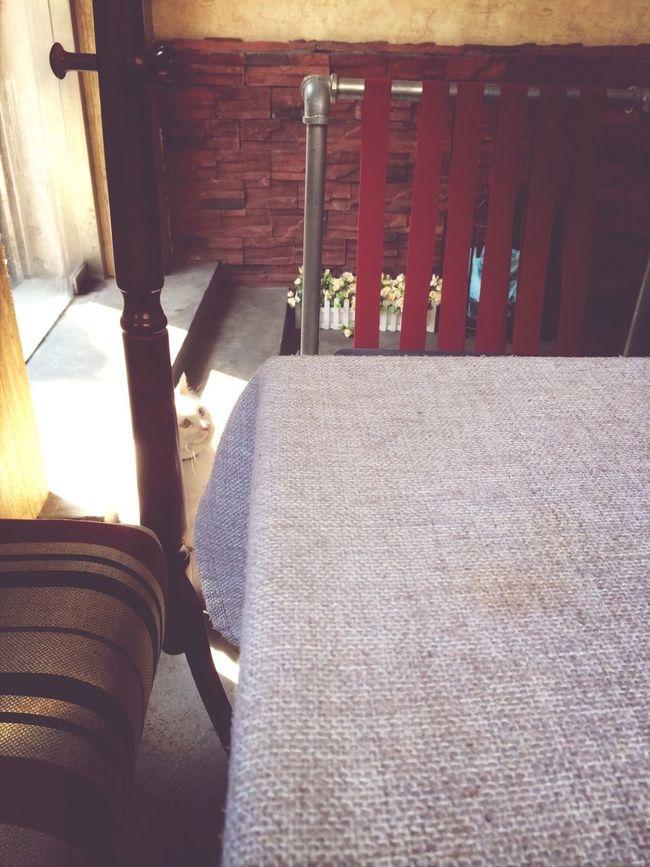 cute cat in the cafe