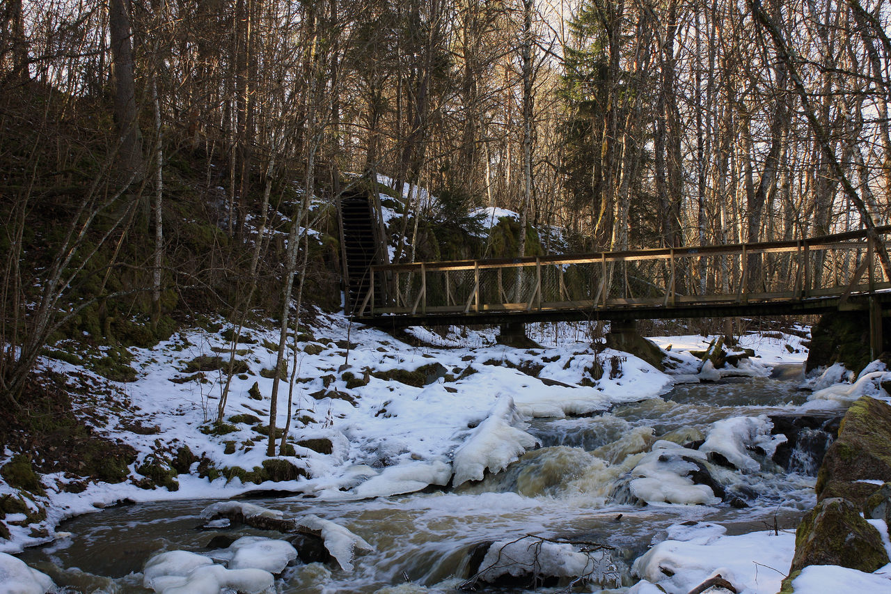 tree, nature, forest, winter, no people, cold temperature, river, snow, outdoors, day, bridge - man made structure, tranquility, beauty in nature, water, landscape
