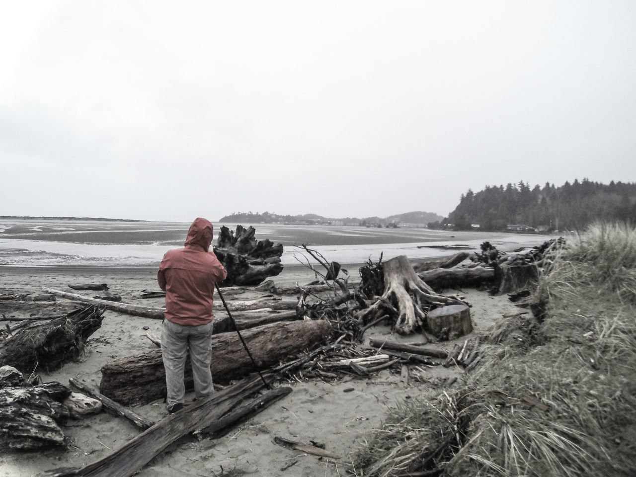 Rear View Of Person Standing By Damaged Trees At Beach Against Sky
