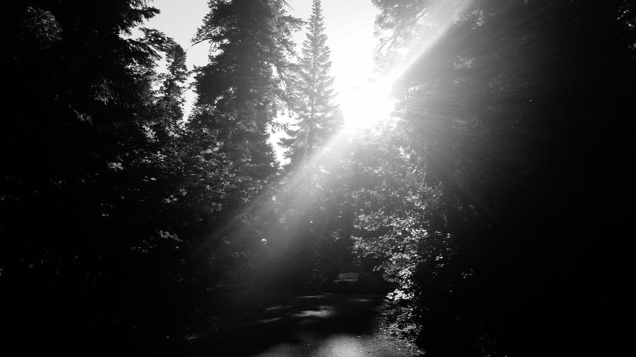 Suttle Lake Sunshine Camping Oregon Suttle Lake Trees