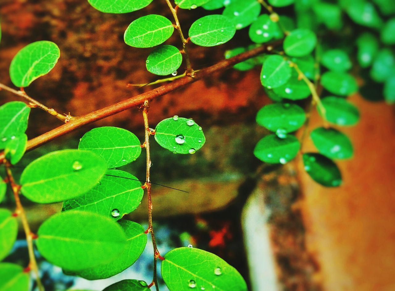 BEST CAPTURE OF THE DAY. have no idea, how did i see it. this plant is so tiny and grew on my balcony. its rainy here in Hyderabad-IN weather is so cool. and this tiny kiddo gave me a reason to smile at morning.