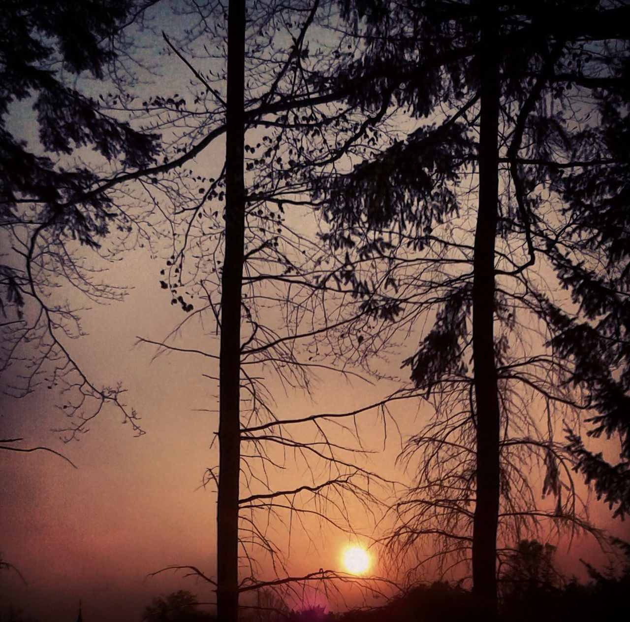 tree, silhouette, sunset, tree trunk, nature, sun, bare tree, beauty in nature, outdoors, scenics, no people, branch, tranquility, sky, tranquil scene, growth, landscape, forest fire, day