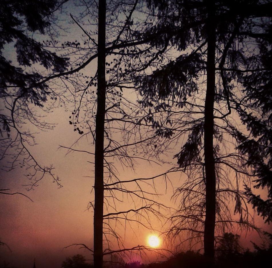Beauty In Nature EyeEm EyeEm Best Shots EyeEm Best Shots - Nature Nature No People Sky Sun Going Down Sunset Sunset_collection Tranquility Tree