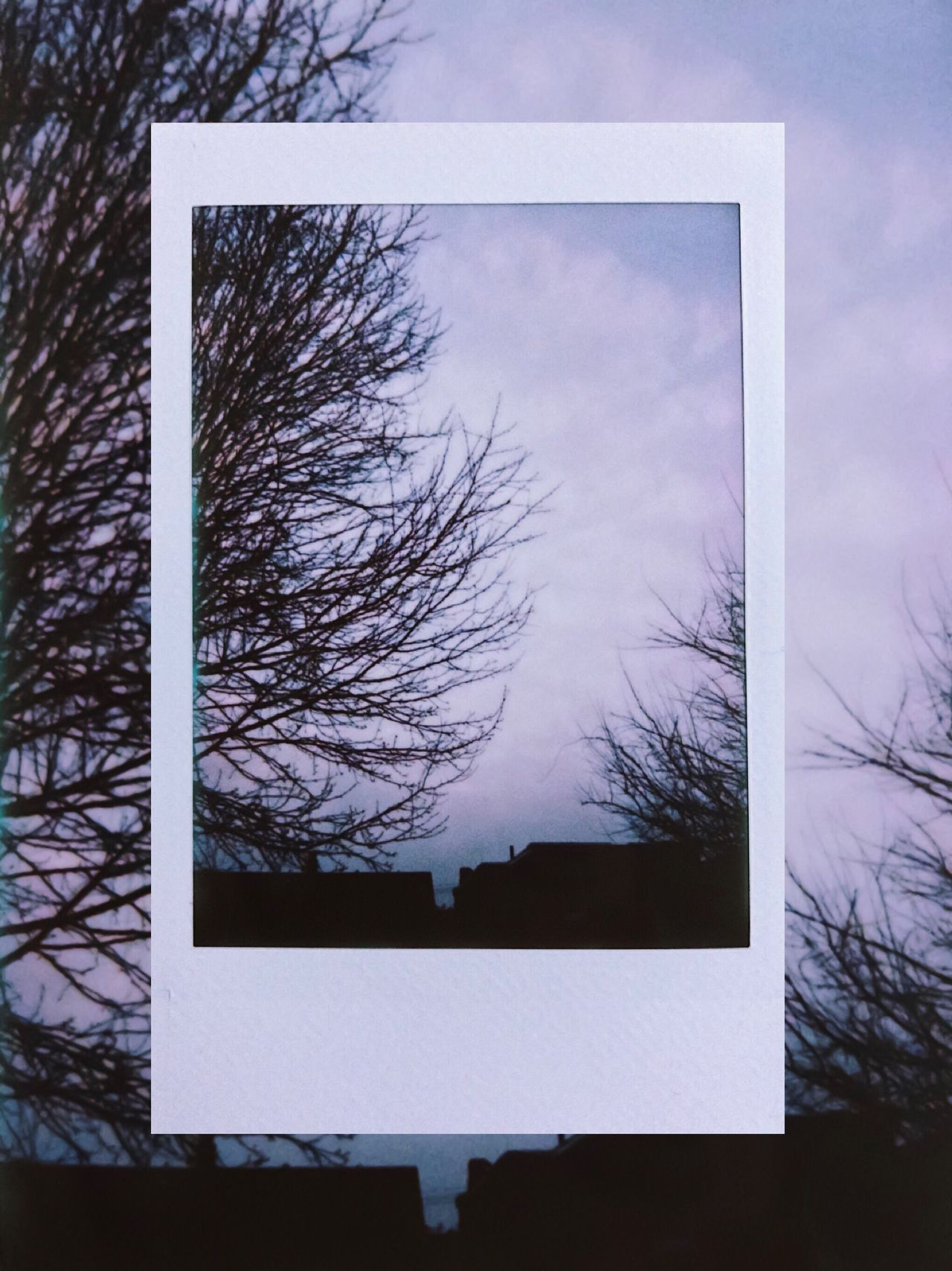 day 28. Instant Photo A Day Tree Cold Temperature Bare Tree Sky Winter Building Exterior No People Low Angle View Architecture Outdoors Day Built Structure Branch Nature Clouds And Sky Cloud - Sky