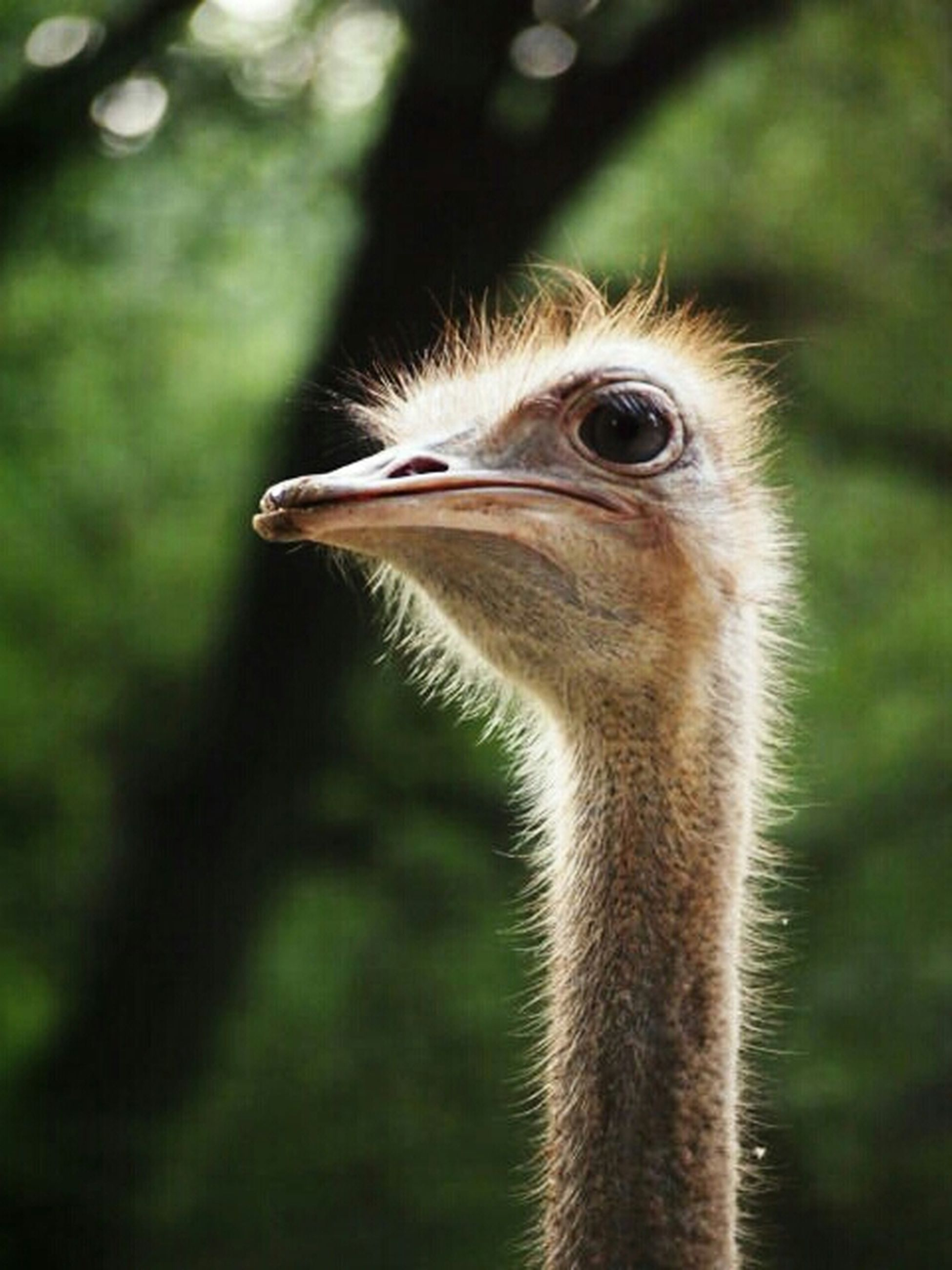 animal themes, one animal, animals in the wild, wildlife, focus on foreground, animal head, close-up, beak, animal body part, bird, side view, looking away, nature, outdoors, animal eye, zoology, day, no people, vertebrate, part of