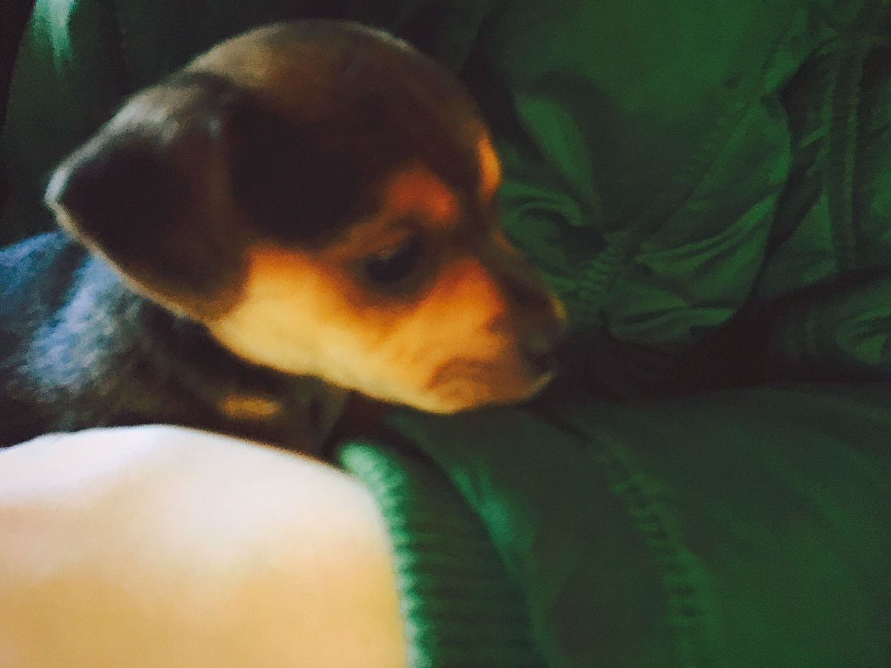 New puppy! 'Guus' ❗❗ One Animal Pets Puppy Dog Child