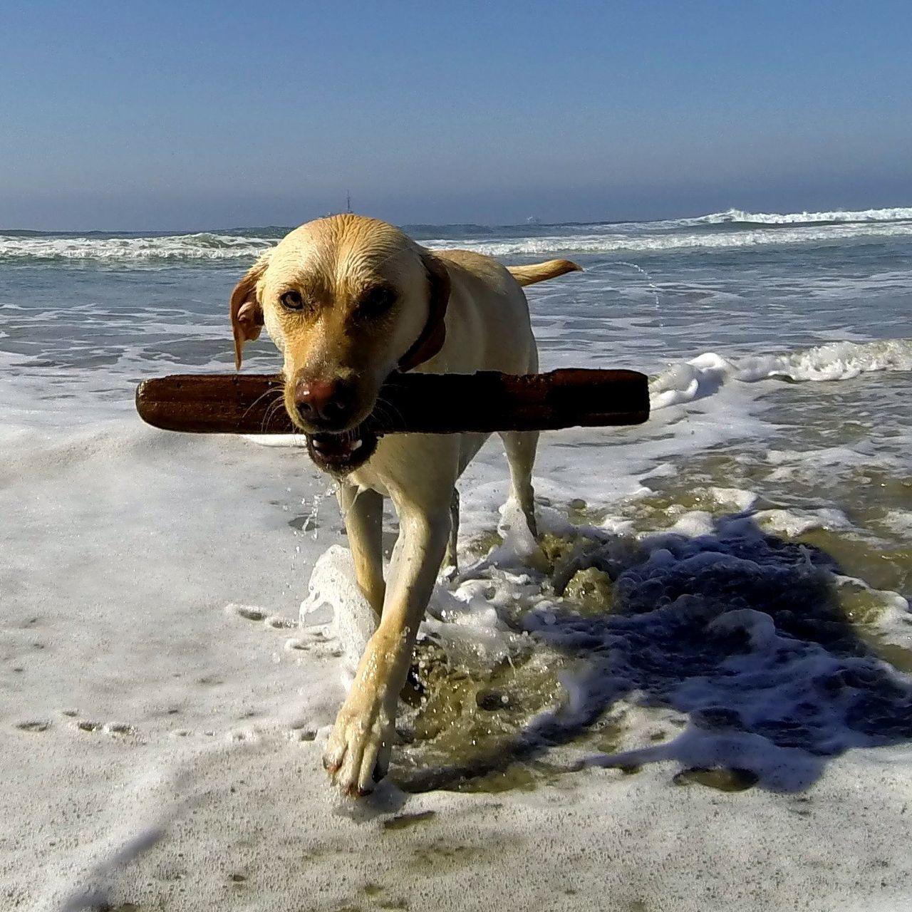 Hugging A Tree Dog Beach Puppy Power