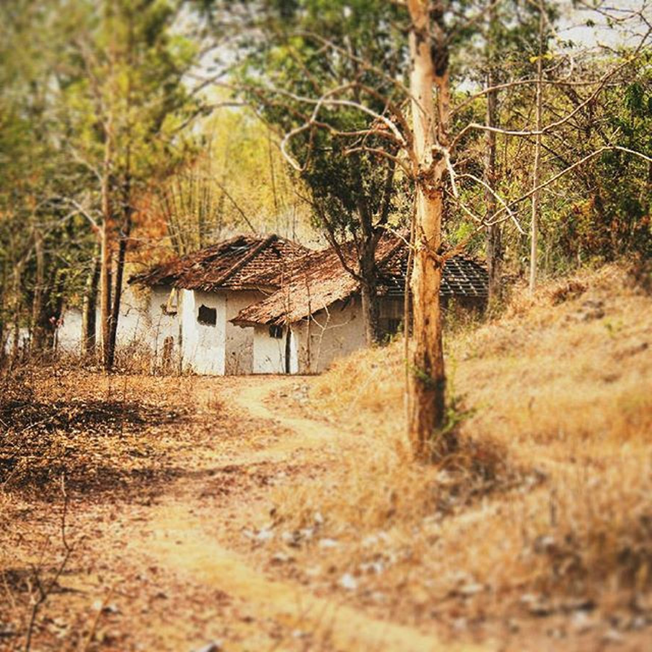 architecture, built structure, house, tree, no people, day, outdoors, building exterior, nature