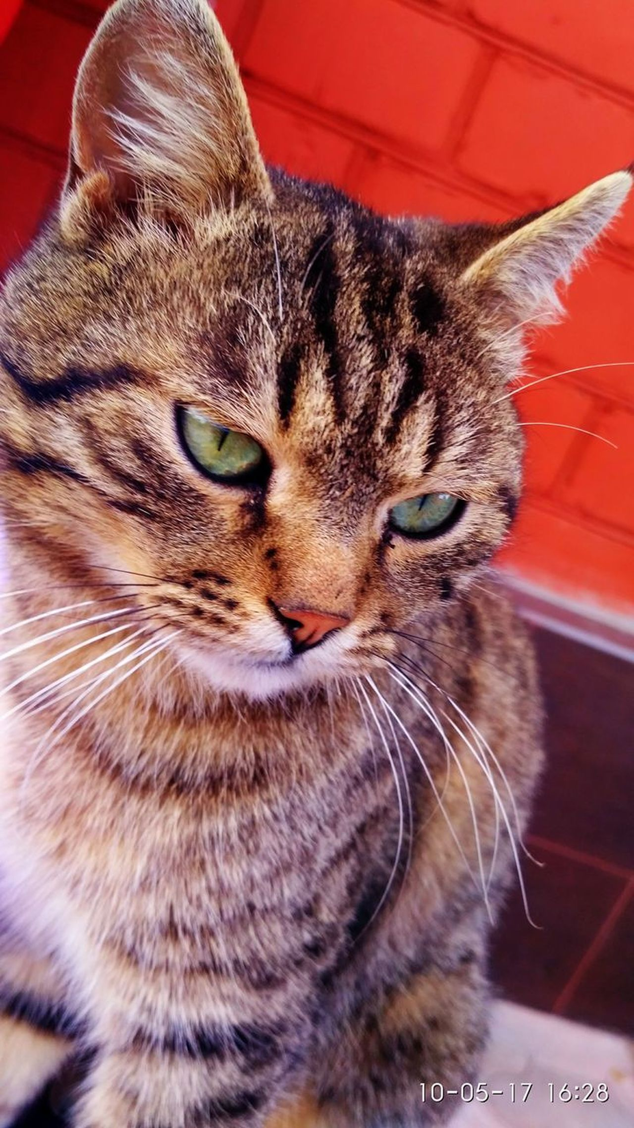 One Animal Animal Themes Cat