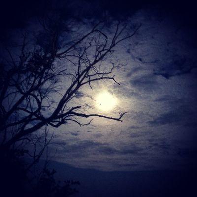 Full Moon Nature Dark Beautiful Tree Mysurumemes Mysore @amazingearthgallery @thephotosociety Storiesofindia Night moon