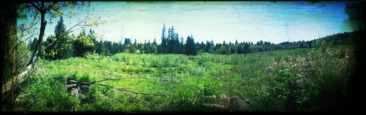 forest, tree, no people, nature, growth, green color, day, tranquility, outdoors, grass, landscape, sky
