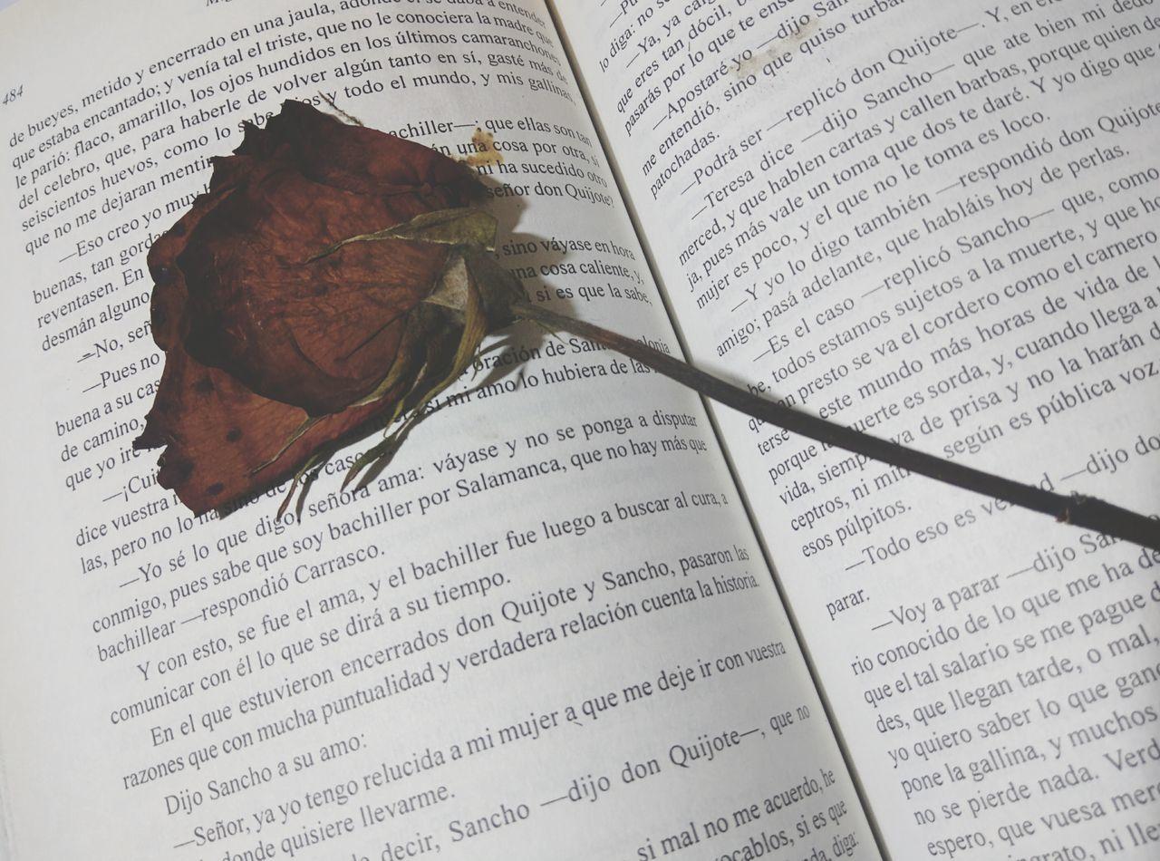 Recuerdos♥ Cutelove Sueños Rosas🌹🌹