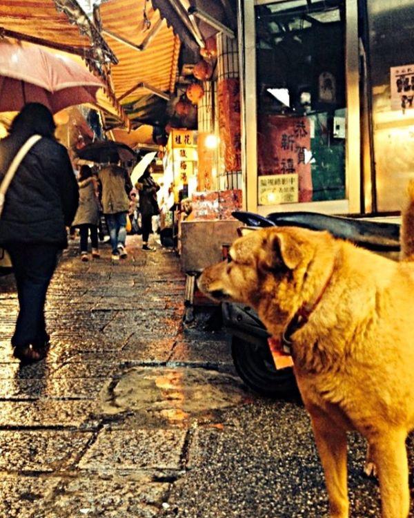 Jiufen Taiwan Raining Dog Dramaticlighting TakeoverContrast Dramatic Angles