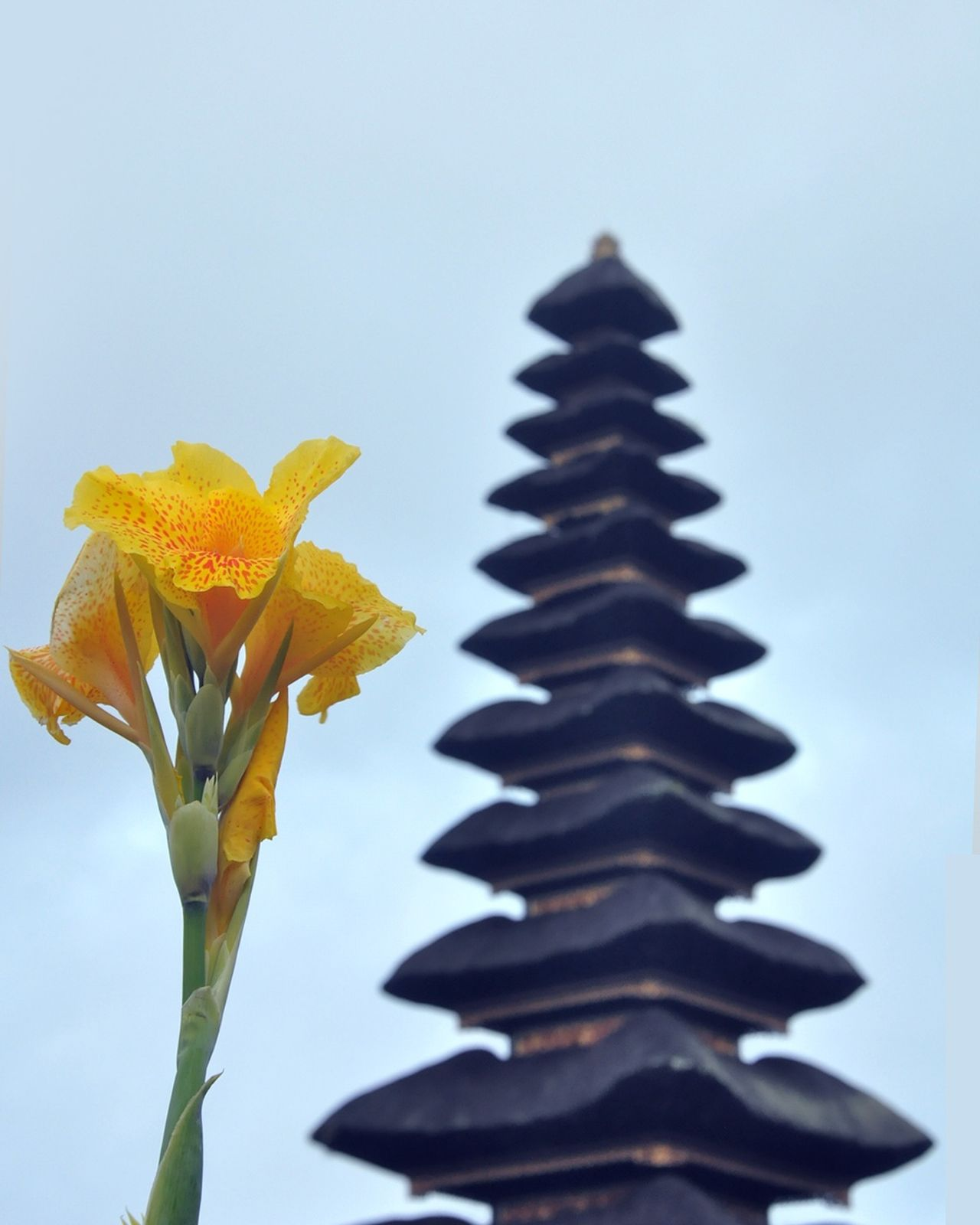 Bedugul, Bali Flower Blue Yellow Nature Sky Beauty In Nature Outdoors Focus Object Beauty In Nature Vacations Tourism Bali Bali, Indonesia Outdoorlife