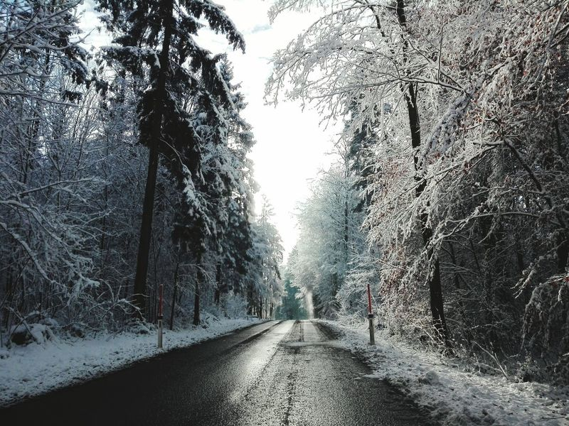 Tree The Way Forward No People Day Outdoors Nature Beauty In Nature Sky Nature Snow Forest Wood Wood - Material