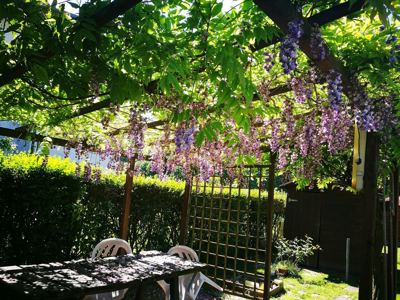 Tree Day Growth No People Outdoors Nature Beauty In Nature Branch Flower Architecture Freshness Glicine Gazebo Natura Beauty In Nature Nature Photography Primavera