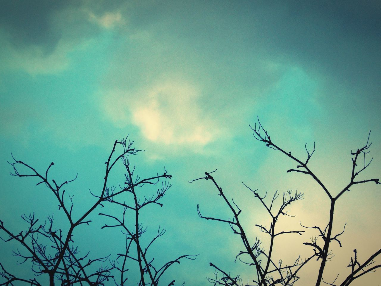 nature, beauty in nature, low angle view, sky, no people, silhouette, branch, outdoors, bare tree, day, plant, tree