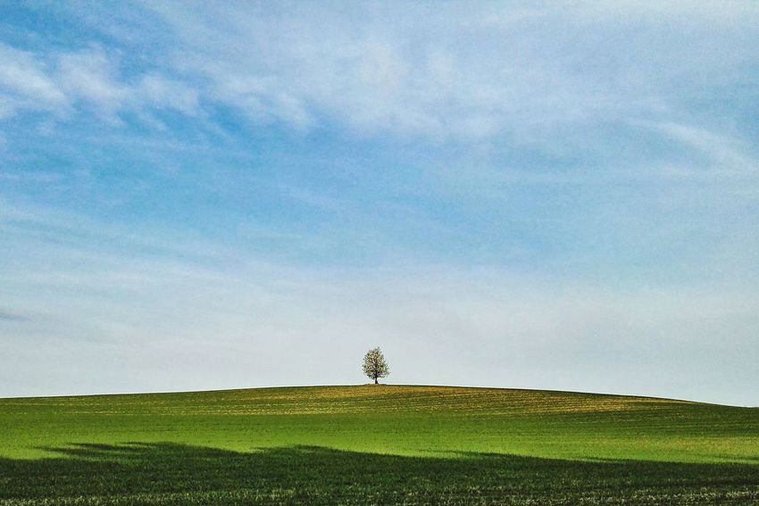 Landscape Landscape_Collection Lonely Tree Spring Landscape Hill Minimal Landscape The Great Outdoors - 2016 EyeEm Awards