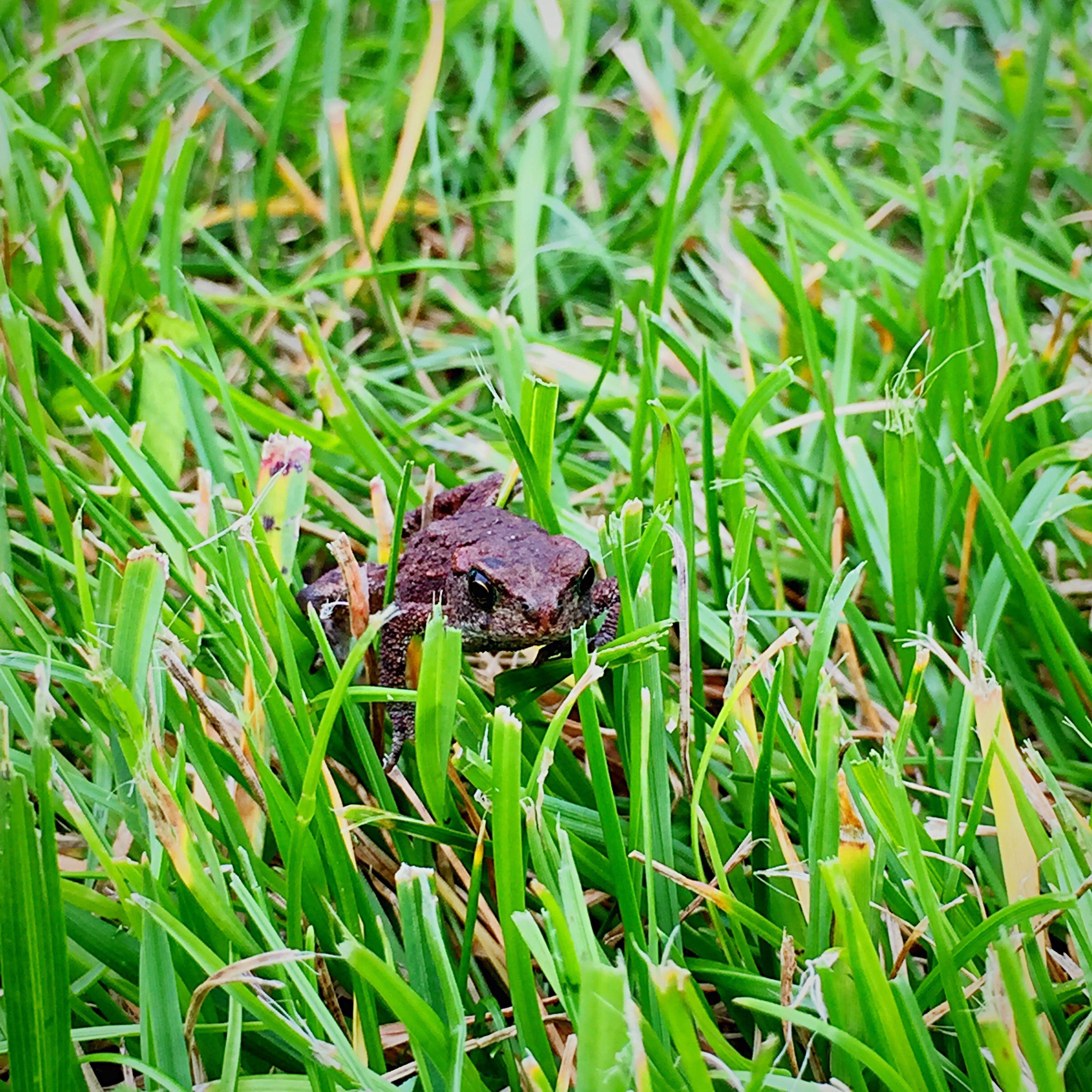 Frog Nesbru Green Grass Nature