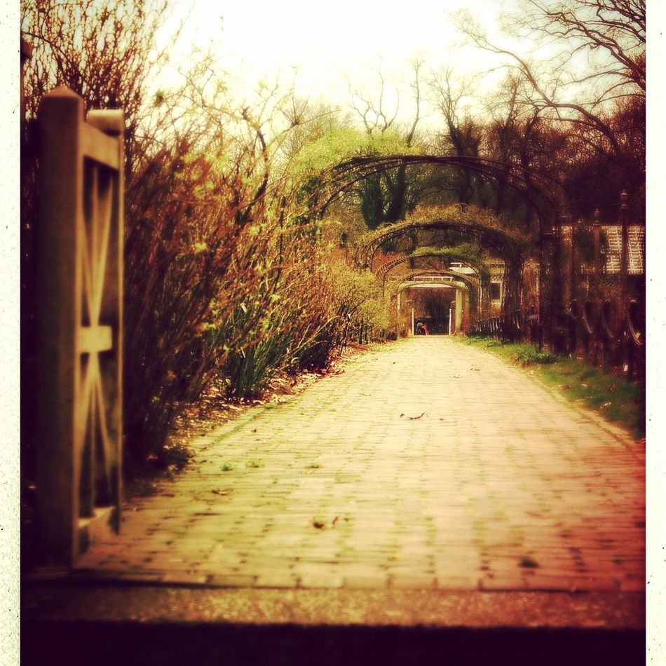 This lovely gate and road can be found in the Brooklyn Botanic Gardens. BrooklynBotanicGarden
