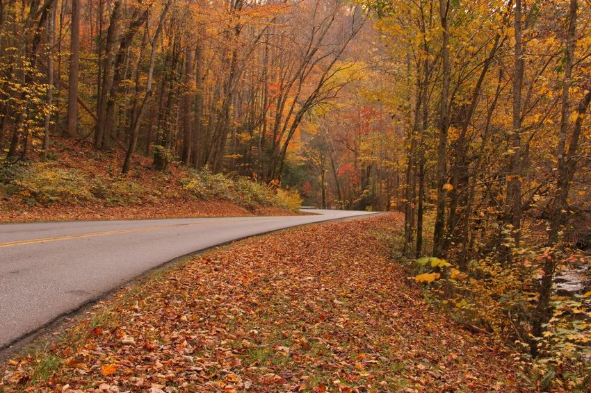 Smokey Mountains Fall 2017 Autumn Colors Autumn Leaves Fall Colors Beauty In Nature Day Fall Fall 2017 Fall Color 2017 Knoxville, TN Nature No People Outdoors Smokey Mountains
