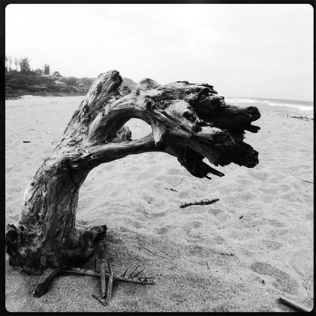 Beach EyeEm Best Shots EyeEm Nature Lover Blackandwhite Bw_collection
