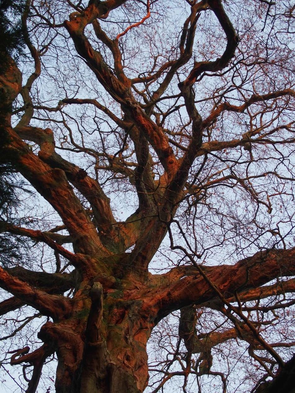 Sunset on a winter tree Tree Branch Low Angle View Nature Beauty In Nature Tree Trunk Tranquility Outdoors Bare Tree No People Countryside Winterscene Scenics Winter