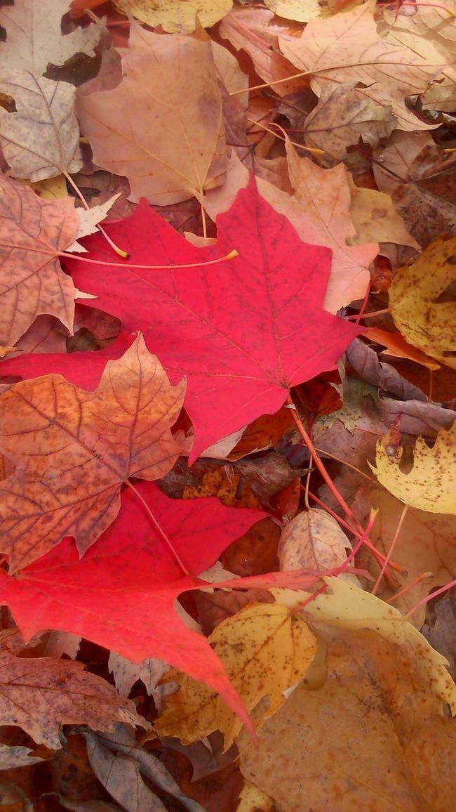 Fall 2014 Fall Beauty Fall Colors Fall Leaves Fall Beau Taking Photos Impression Awesome Nature Awesome! Leaves