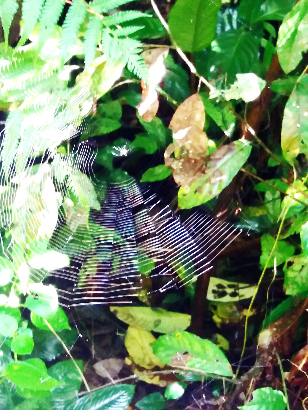 Nature Close-up Spider Web Animal Themes Outdoors Beauty In Nature Animals In The Wild Spider Nature Malaysia EyeEm Nature Lover EyeEm Best Shots - Nature Malaysia Photography Spiderworld