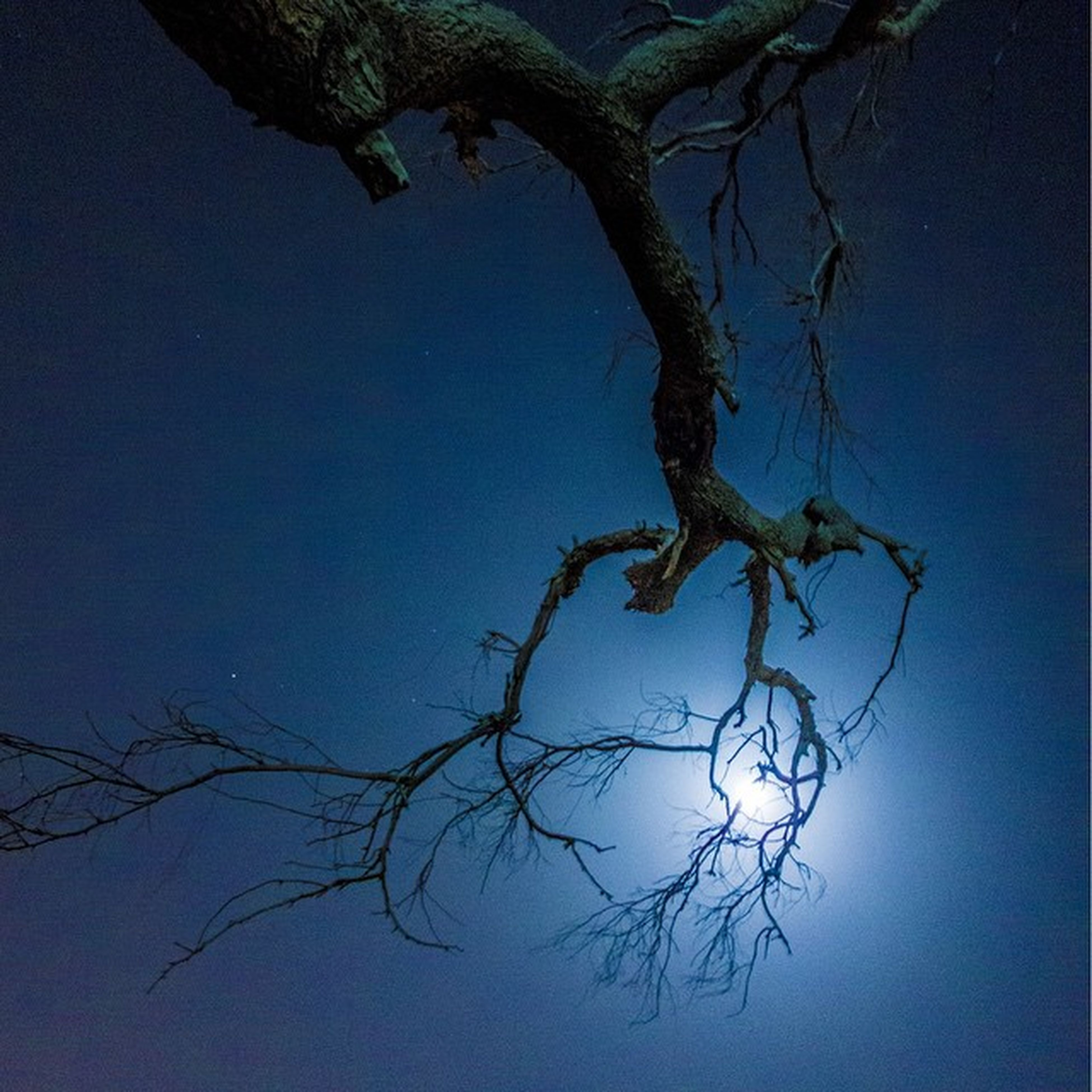 branch, clear sky, tree, bare tree, low angle view, nature, tranquility, blue, copy space, beauty in nature, twig, growth, tree trunk, silhouette, sky, no people, outdoors, scenics, dead plant, leaf
