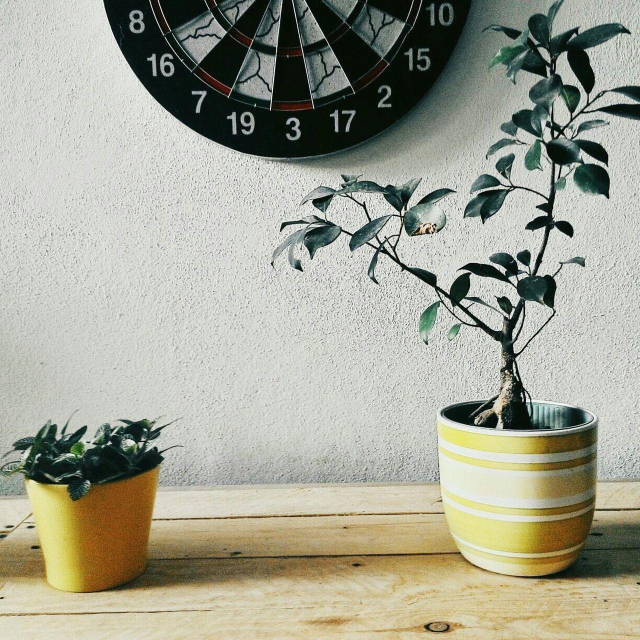 Beautiful stock photos of target, Dartboard, Growth, Indoors, Leaf