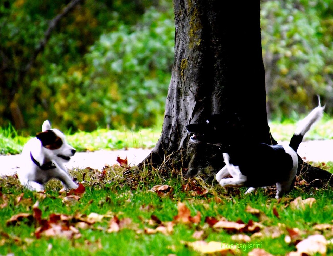 Animal Themes Domestic Animals Dog Love Nature Autumn Impressions🍁🍂🎃 The Autumn Is The Spring Of Winter One Animal EyeEm Best Shots Showcase: October Eye4photography  Nikonphotography EyeEm Best Shots - Nature The Autumn Sky☁🍃🍂🍁 EyeEm Nature Lover EyeEm Good Situation To Photograph 📸 EyeEm Gallery Eye Dog No People Nature Photography