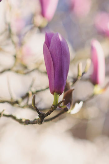 Nature Tree Beauty In Nature Blooming Branch Close-up Day Depth Of Field Flower Flower Head Fragility Freshness Growth No People Outdoors Petal Photography Selective Focus