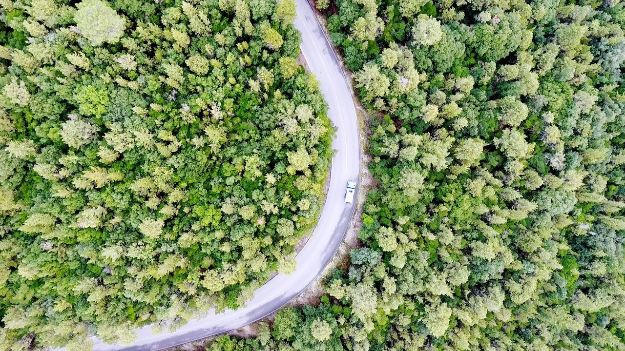 Top Down Forest Street Way Curvy Forest Road Dronephotography One Car Green Color High Angle View No People Nature