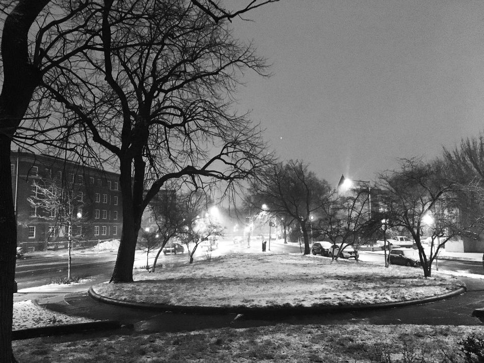 Streetphotography EyeEm Best Shots - Black + White Eye4photography  Bare Tree Nature Outdoors No People Sky Park Tree