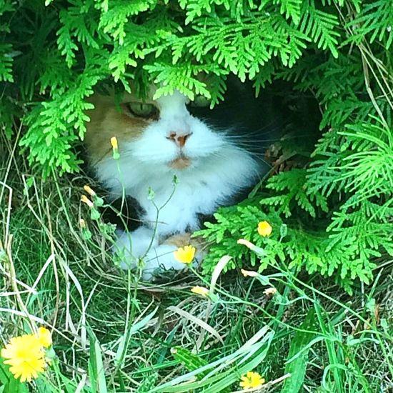 Little Friend Louise Cat♡ My Cat♥