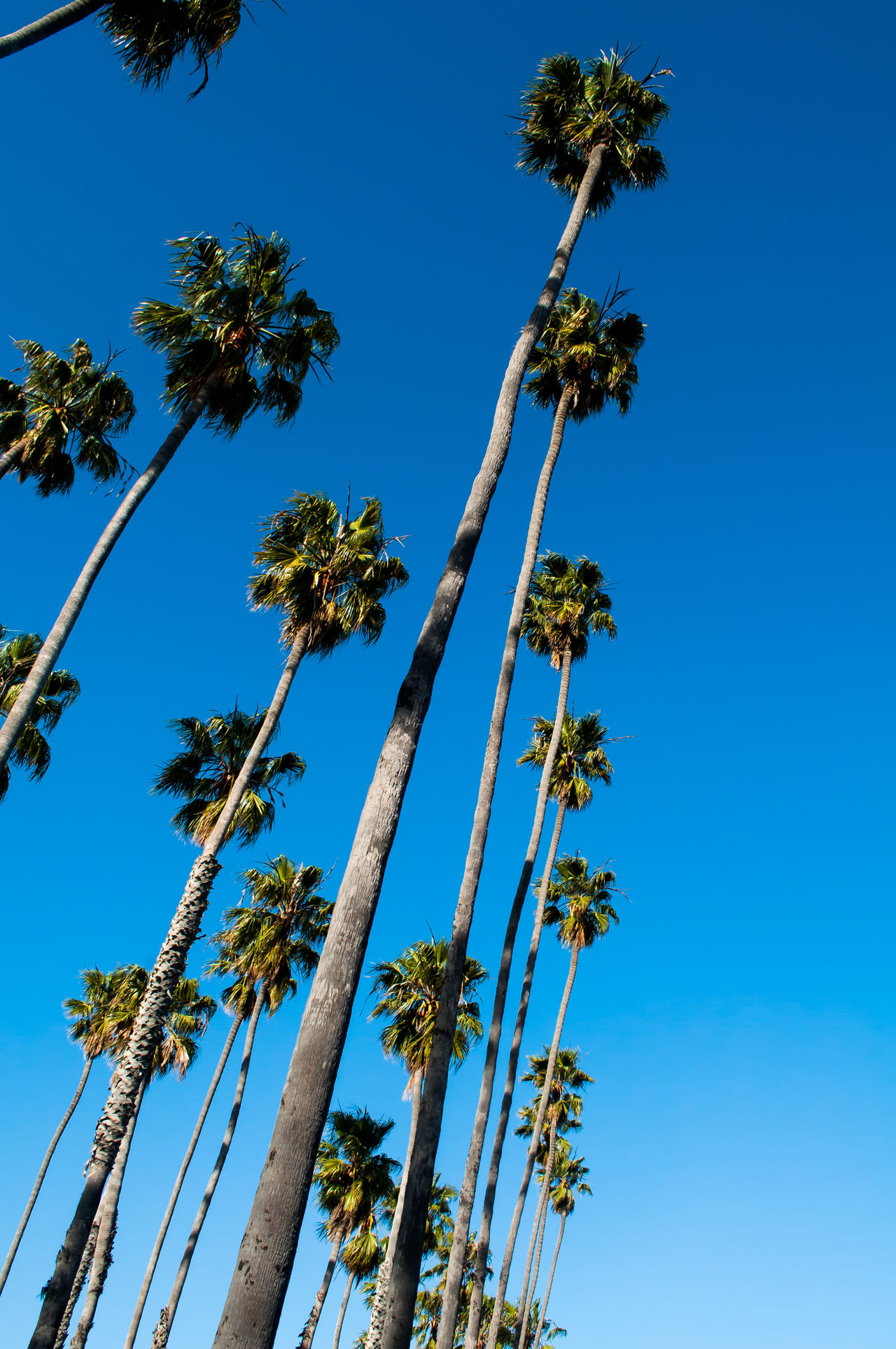 Beautiful stock photos of hollywood, Backgrounds, Blue, California, Clear Sky