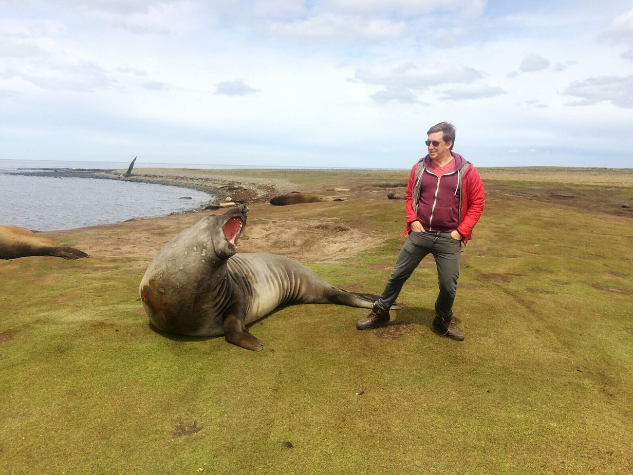 Elephant Seal in the Falkland Islands.