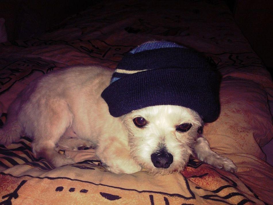 My Dog LEO