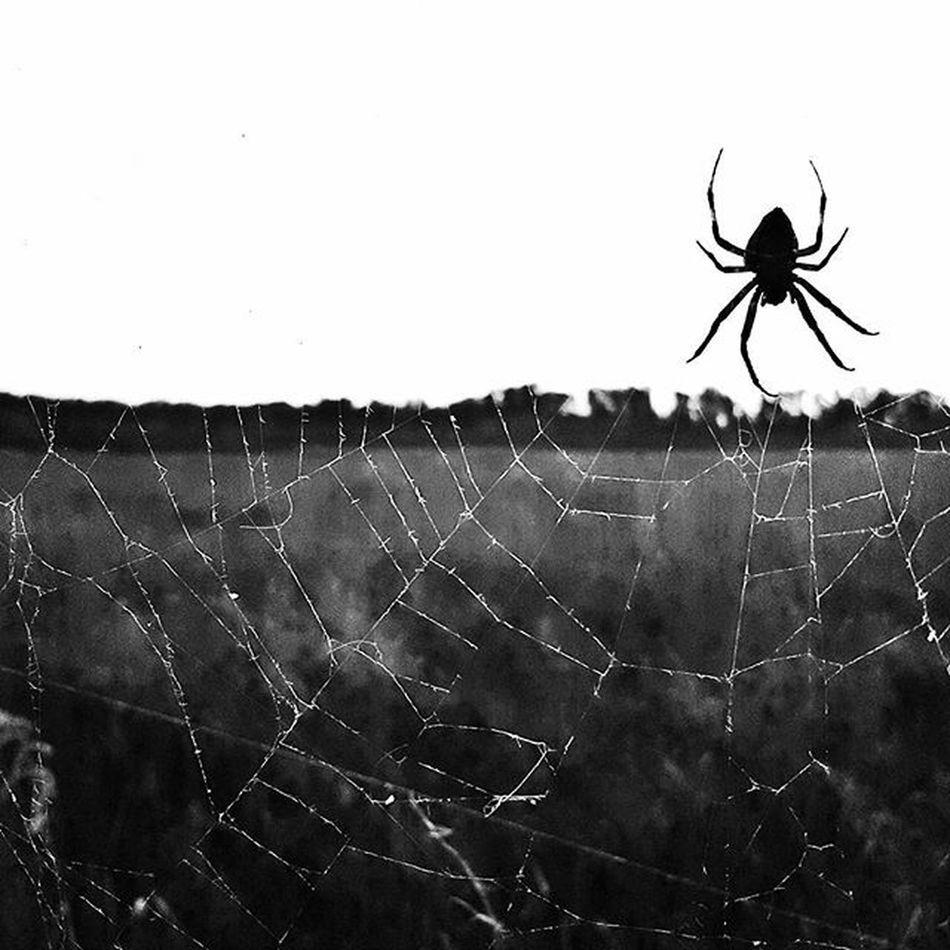 Blackandwhite Spider Spiderweb Wildliferefuge Craborchardlake Southernillinois Illinois
