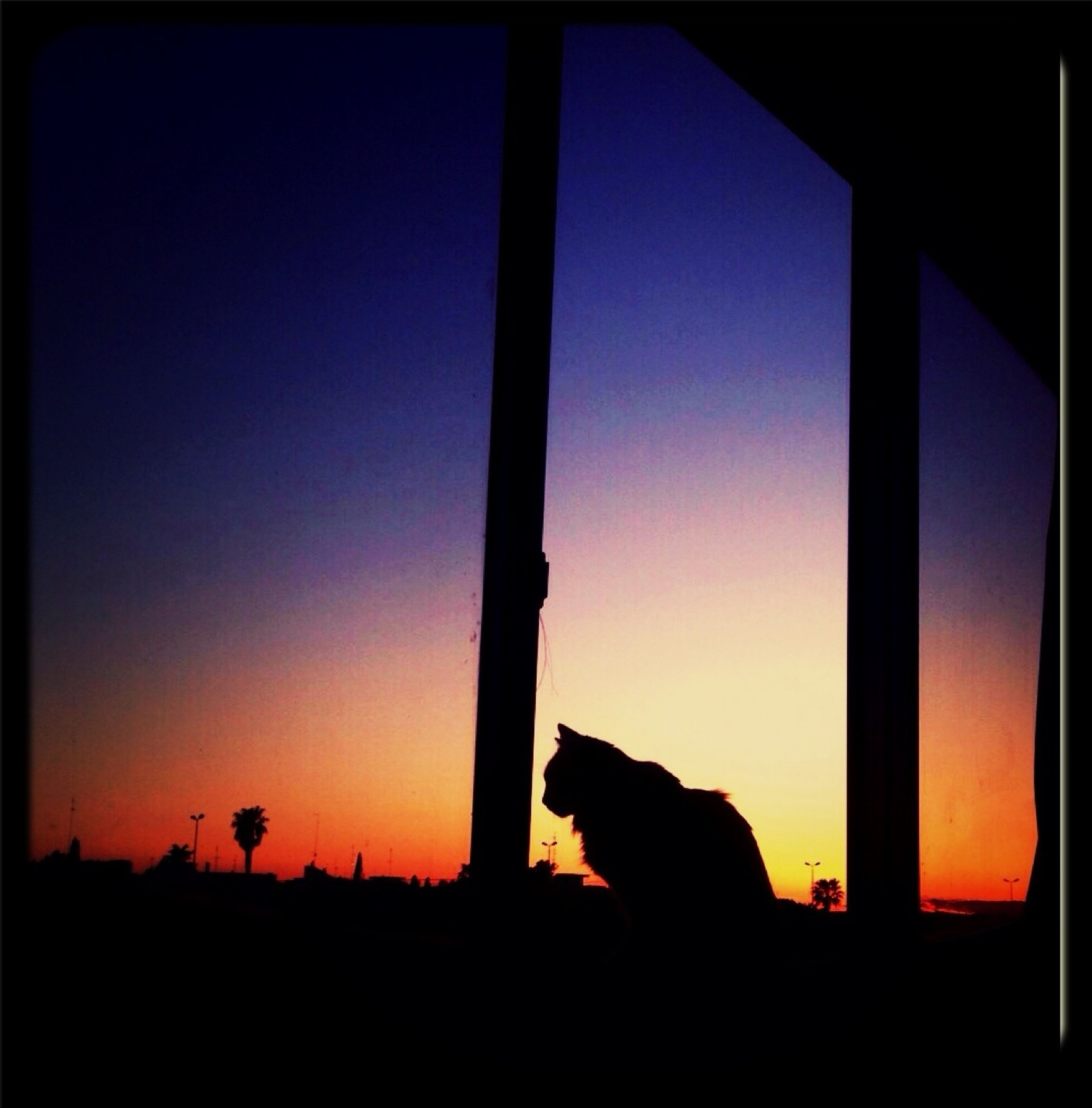 domestic animals, one animal, pets, silhouette, animal themes, mammal, sunset, dog, indoors, sitting, orange color, window, sunlight, clear sky, domestic cat, relaxation, copy space, sun, sky, side view