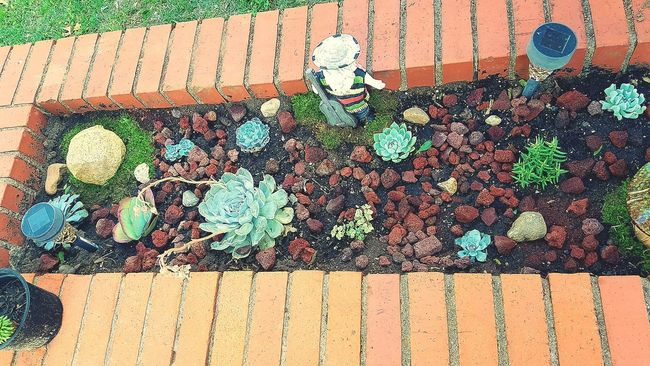 Check This Out Garden Photography Cactus Garden Cactusporn My Cactus Garden