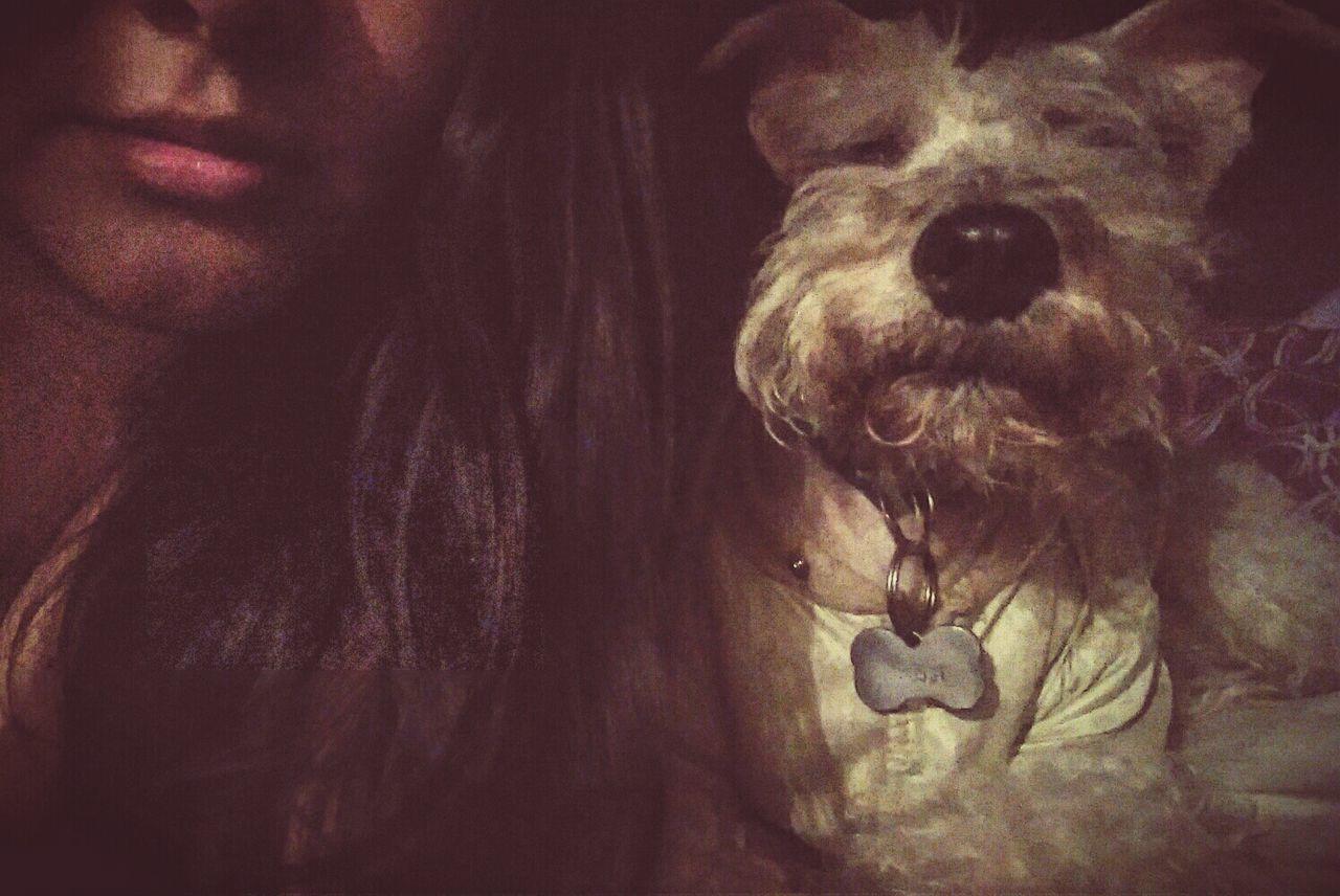 Listas para dormir :3 Korie Sleeping Dog 🐶 Happy :) Good Night ❤✌ Pet Portraits