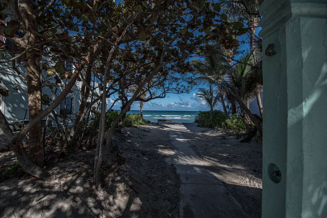 Living Color Beach Beach Life Beach Photography Beauty In Nature Branch Day Enjoying The View Florida Landscape Life Is A Beach Lifestyle Photography Nature No People Outdoors Photographyisthemuse Scenics Sea Sky Tranquility Travel Photography Tree Tree Trunk Vacations Water Wave